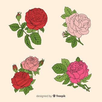 Collection de roses dessinées à la main