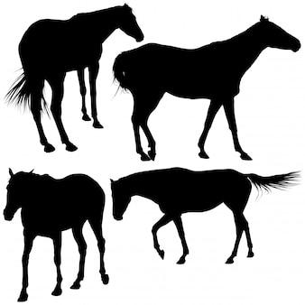 Collection silhouette de cheval