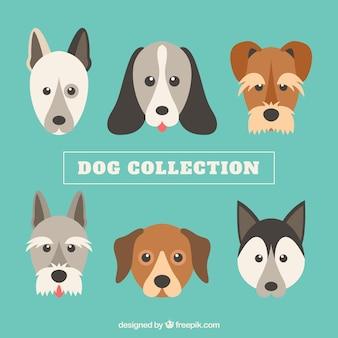 Collection de six chiens mignons dans la conception plate