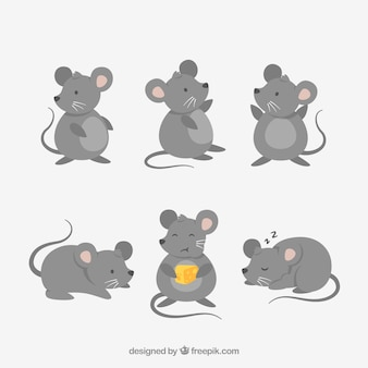 Collection de souris plates