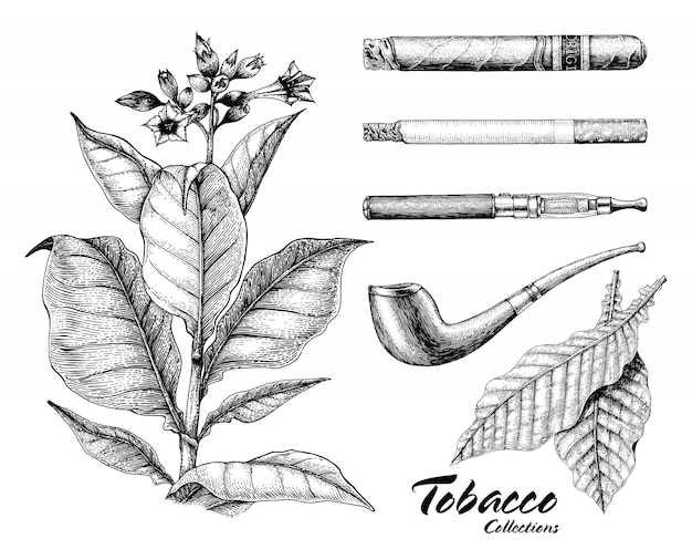 Collection de tabac dessin style vintage à la main