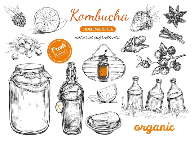 Collection de thé maison kombucha. illustration dessinée à la main.