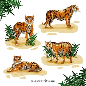 Collection de tigres dessinés à la main