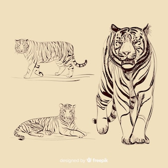Collection de tigres incolores dessinés à la main