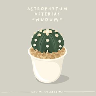 Collection de type cactus. cactus en petit pot blanc isolé sur fond beige.