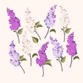 Collection de vecteur de branches de lilas