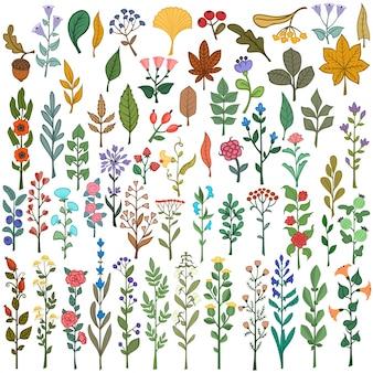 Collection de vecteur éléments floraux colorés fleurs feuilles de baies et de branches