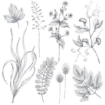 Collection de vecteur de fleurs et d'herbes dessinées à la main isoler sur fond blanc