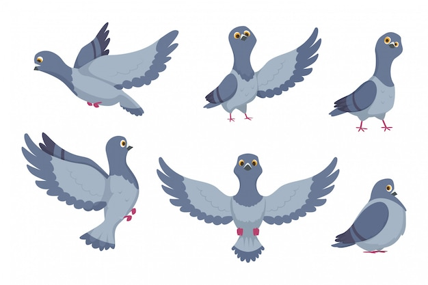 Collection de vecteur de pigeons de dessins animés