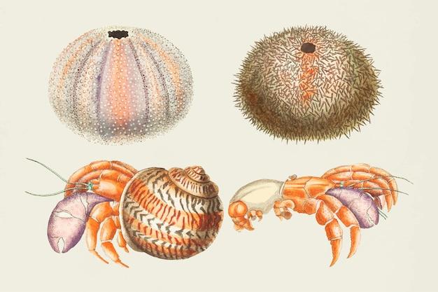 Collection vintage dessinés à la main d'animaux marins de vecteur coloré