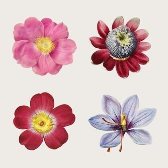 Collection vintage de roses et de lys