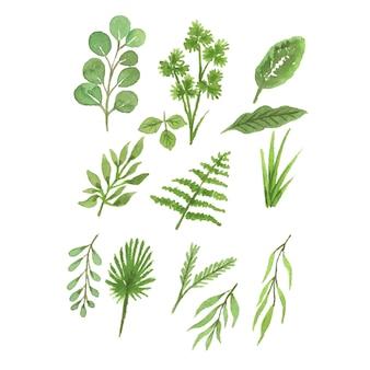 Collections de feuilles tropicales à l'aquarelle à la main