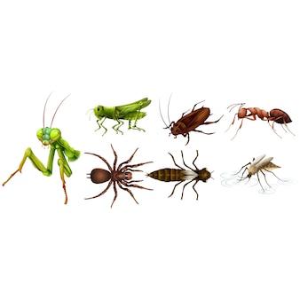 Coloré insectes collection