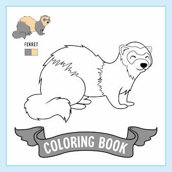 Coloriage furet animaux belette livre hermine vison