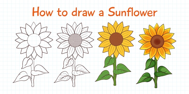 Comment dessiner le tournesol
