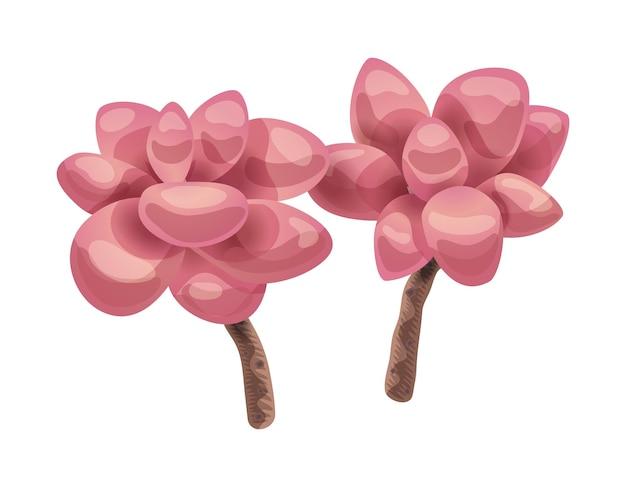 Composition de cactus avec image isolée de fleur de magnolia sur blanc