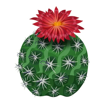Composition de cactus avec image isolée de fleur de parodia sur blanc