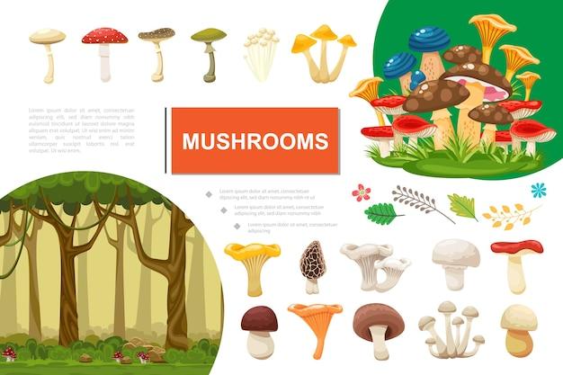 Composition colorée de champignons plats