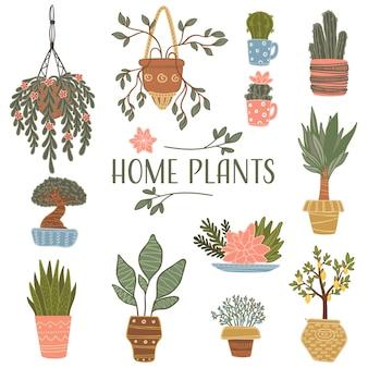 Composition floristique et fleurs en pots