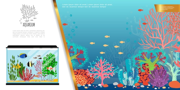 Composition lumineuse d'aquarium plat avec des poissons colorés exotiques, des pierres d'algues et des coraux
