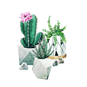 Composition de plantes de cactus en pot et de plantes succulentes