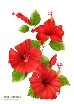Composition réaliste de fleurs d'hibiscus