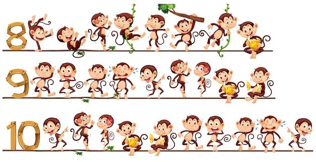 Compter des nombres avec des singes