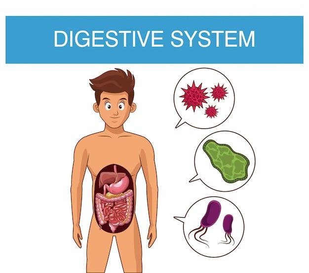 Concept de bactéries du système digestif