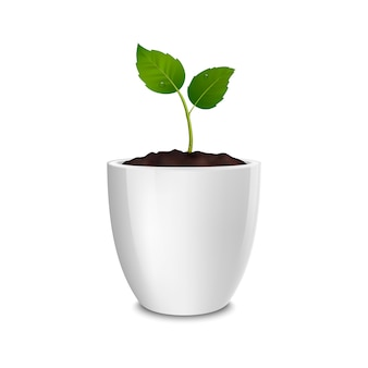 Concept de croissance. modèle d'icône réaliste de la pousse dans un pot de fleur blanc, isolé sur fond blanc