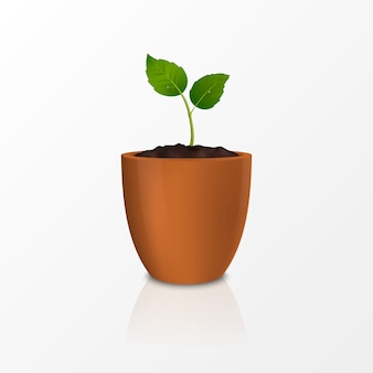 Concept de croissance. modèle d'icône réaliste de la pousse dans un pot de fleur brun, isolé sur fond blanc