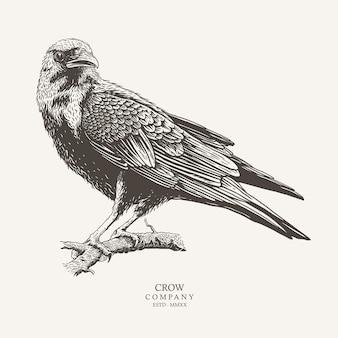 Concept crow