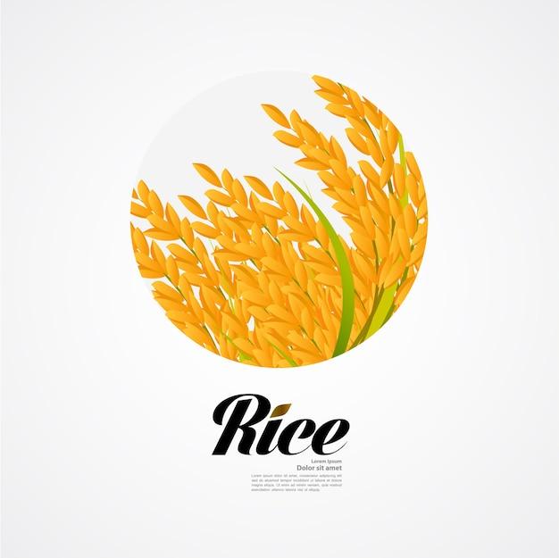 Concept de design de grande qualité de riz premium