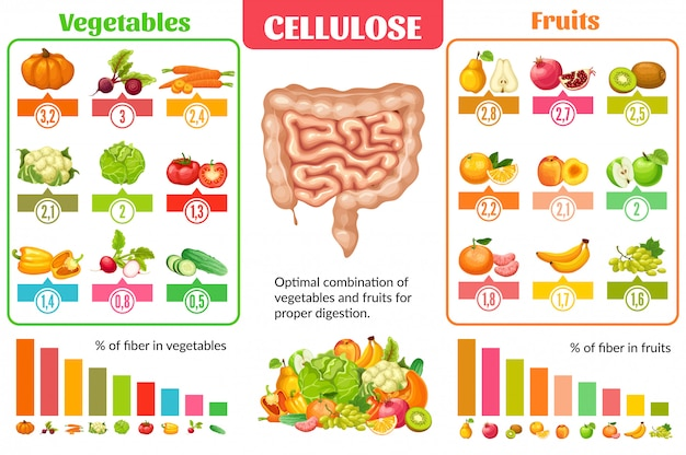 Concept d & # 39; infographie de nutrition saine de dessin animé