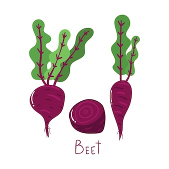 Concept de légumes betteraves dessinés à la main illustration plate moderne