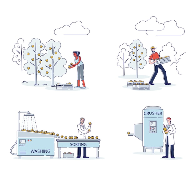 Concept de production de jus. les gens cueillent des oranges sur la plantation