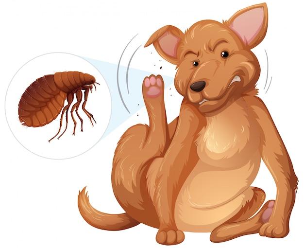Concept de puces chien démangeant
