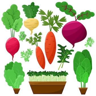 Concept de racines et de salade