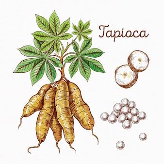Concept de tapioca dessiné à la main