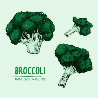Conception de brocoli tiré par la main