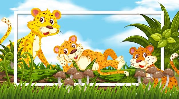 Conception de cadre avec des tigres mignons sur le journal