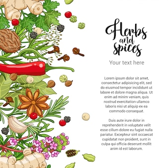 Conception de carte alimentaire avec des épices et des herbes