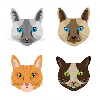 Conception de chat pour animaux de compagnie.