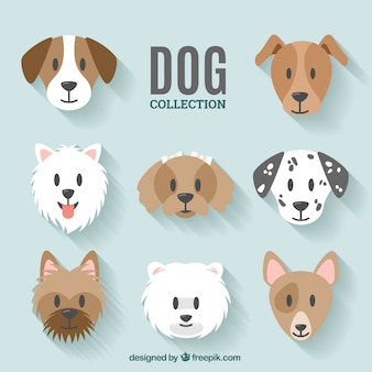 Conception de collection de chien