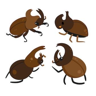 Conception de collection de coléoptères