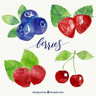 Conception de collection de fruits
