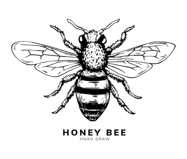 Conception de dessin à la main d'abeille à miel