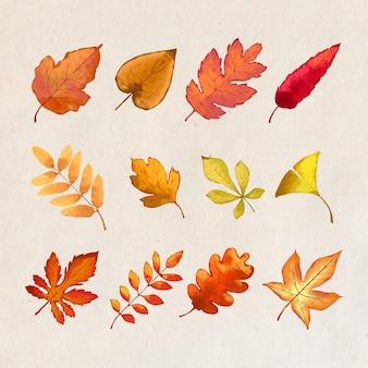 Conception de feuilles de forêt d'automne