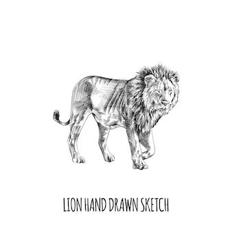 Conception d'illustration de croquis animal lion dessinés à la main
