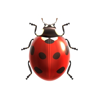 Conception ladybird