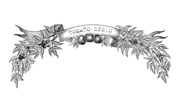 Conception de marque de tomate pour l'étiquette de produit main dessiner vintage style de gravure clip art noir et blanc isolé sur fond blanc3